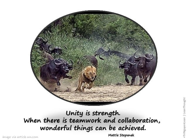 image via article.wn.com Unity is strength. When there is teamwork and collaboration, wonderful things can be achieved. Ma...