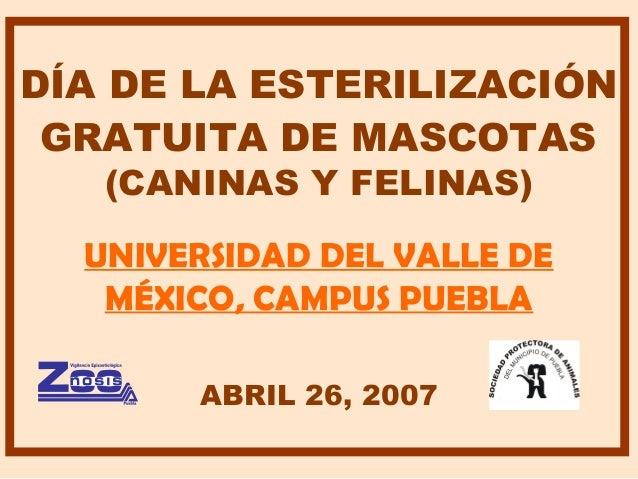 DÍA DE LA ESTERILIZACIÓN GRATUITA DE MASCOTAS (CANINAS Y FELINAS) UNIVERSIDAD DEL VALLE DE MÉXICO, CAMPUS PUEBLA ABRIL 26,...