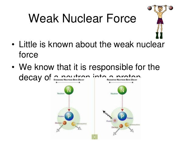 the strong nuclear force The weak nuclear force is one of the fundamental forces of physics and chemistry  here is the weak force definition along with examples.
