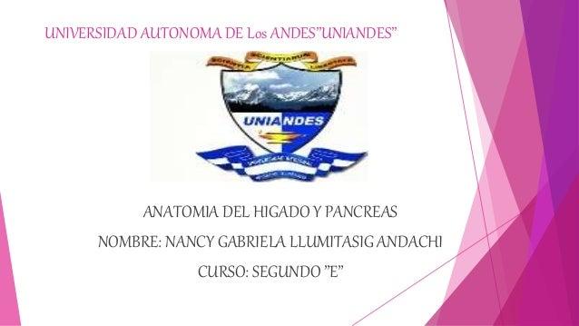 """UNIVERSIDAD AUTONOMA DE Los ANDES""""UNIANDES"""" ANATOMIA DEL HIGADO Y PANCREAS NOMBRE: NANCY GABRIELA LLUMITASIG ANDACHI CURSO..."""