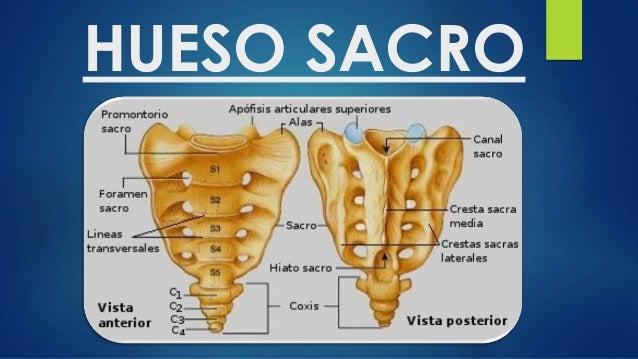 Sacro y coccix