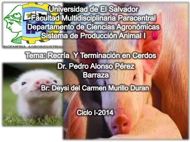INTRODUCCION La industria porcina ha desarrollado un sistema en que cada una de las etapas de producción se encuentra en u...