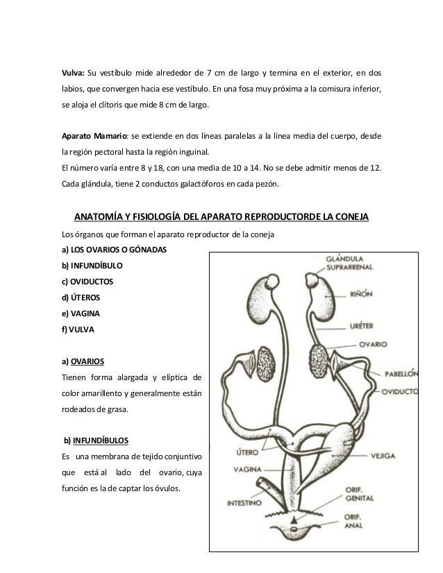 pdf anatomia del sistema reproductor femenino de los animales