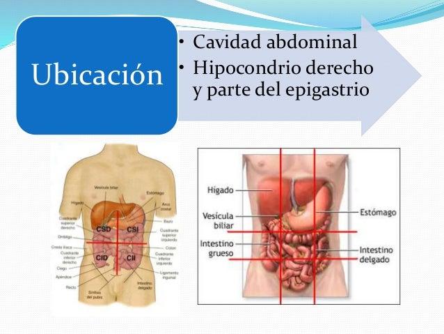 Anatomía II Hígado y Vesícula Biliar