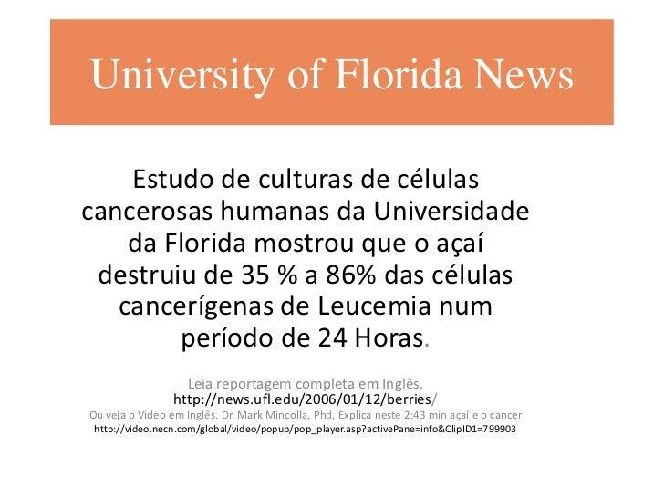 University of Florida News    Estudo de culturas de célulascancerosas humanas da Universidade    da Florida mostrou que o ...