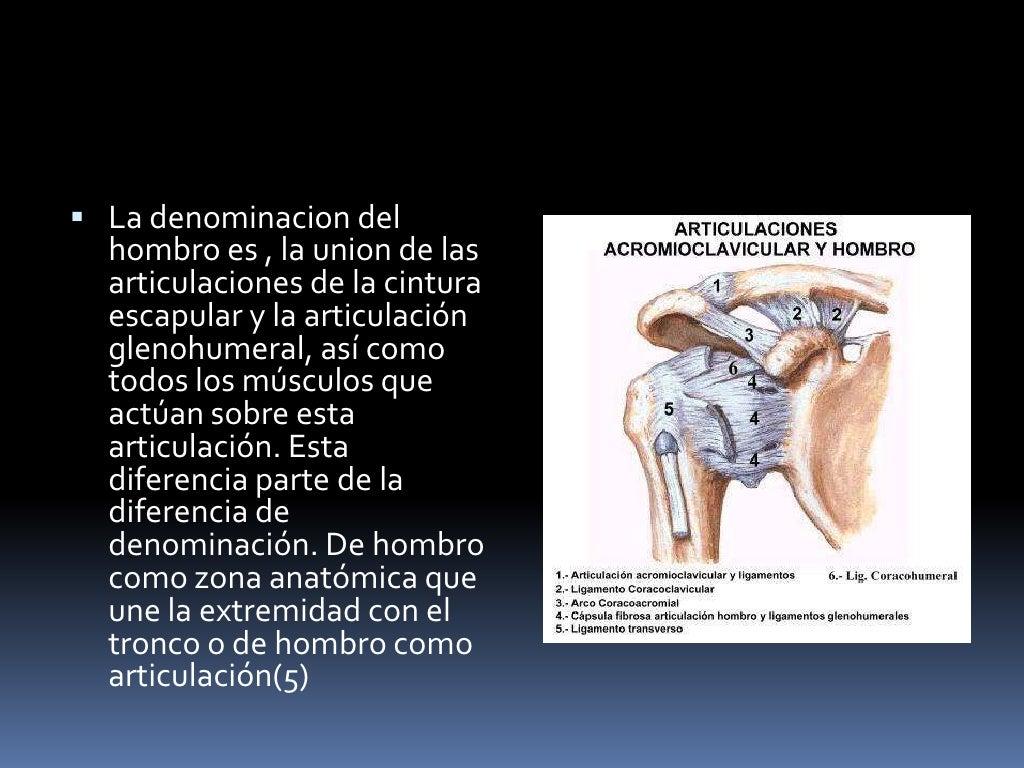 Increíble Hombro Ligamento Anatomía Motivo - Imágenes de Anatomía ...