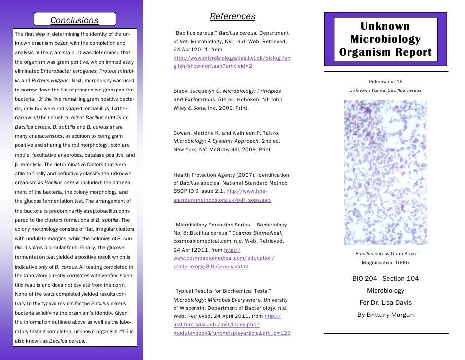 16S ribosomal RNA