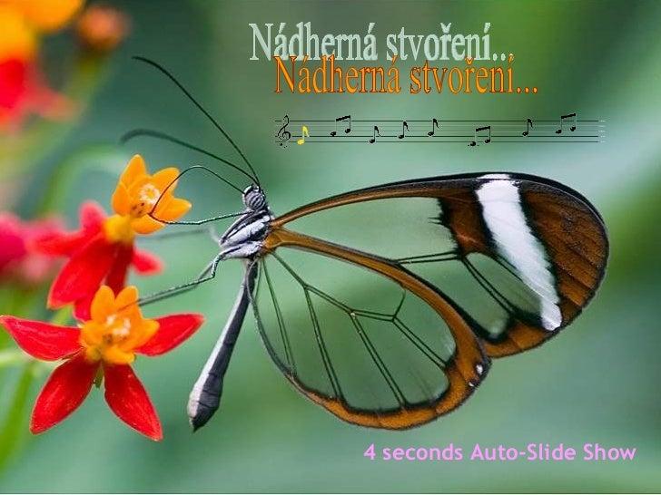 Nádherná stvoření... 4 seconds Auto-Slide Show