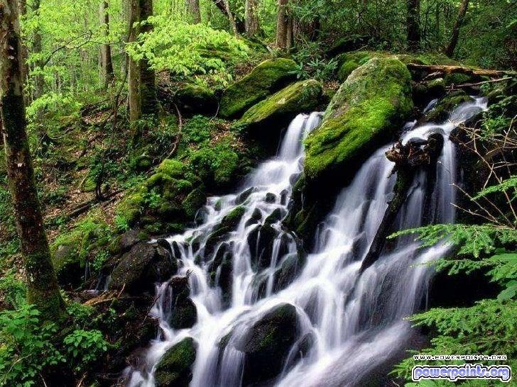 Un lugar en_el_bosque-33602 Slide 2