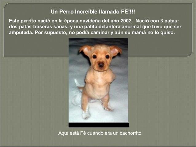 Un Perro Increíble llamado FÈ!!!! Este perrito nació en la época navideña del año 2002. Nació con 3 patas: dos patas trase...