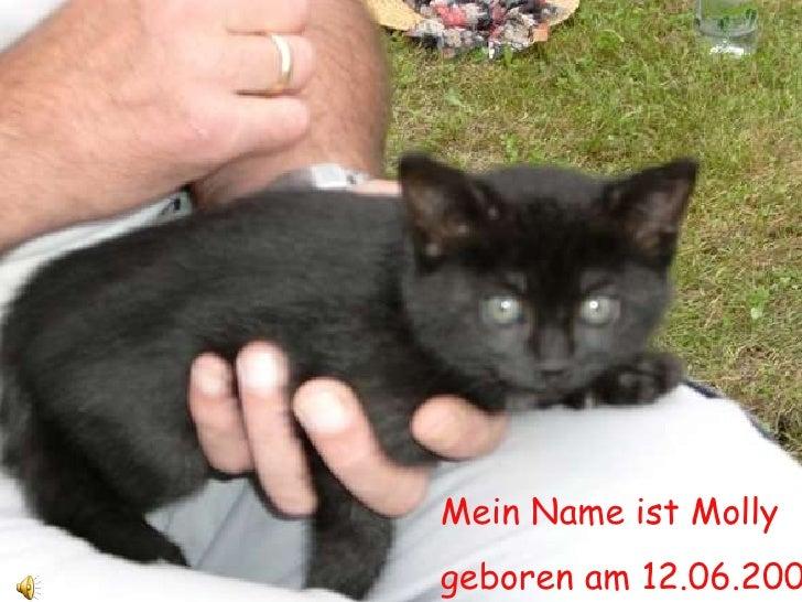 Mein Name ist Molly geboren am 12.06.2009