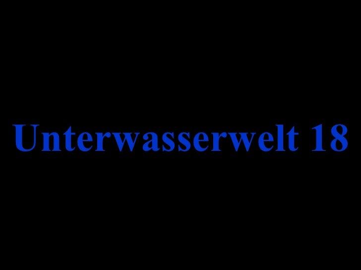 Unterwasserwelt 18