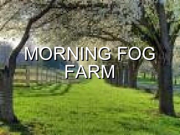MORNING FOG FARM