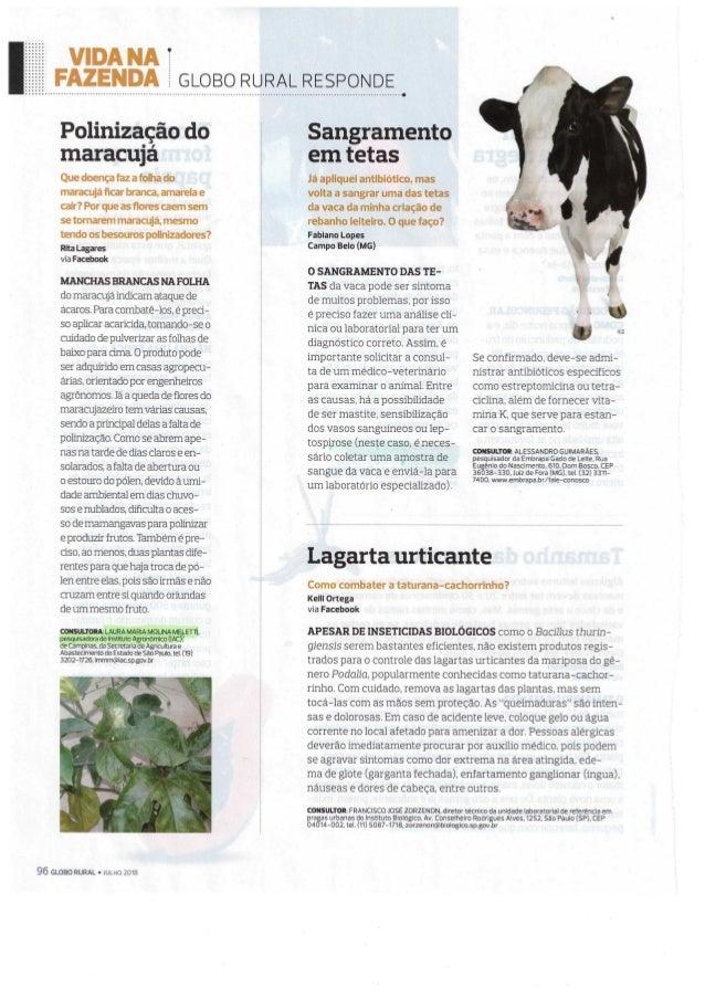 Globo rural - revista