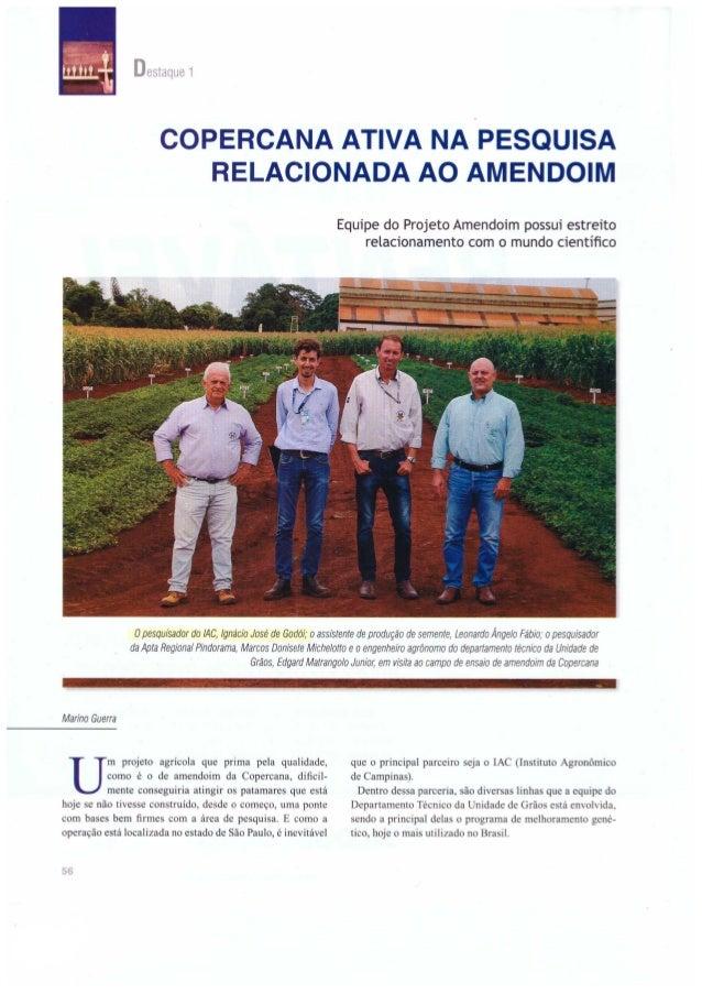 Copercana ativa pesquisa relacionada ao Amendoim