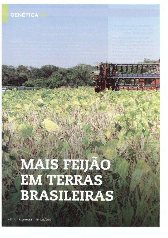 Genética: Mais feijão em terras brasileiras
