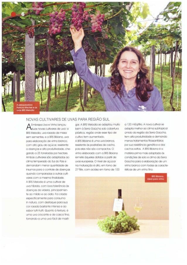 Novas Cultivares de uvas para região sul