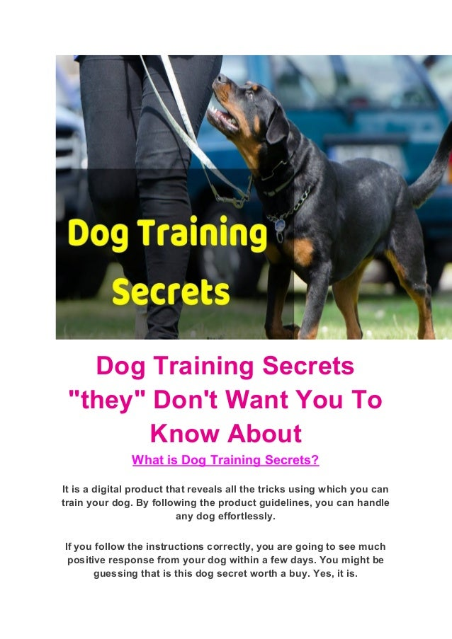 Dog Training Secrets They Don T Want You To Know About