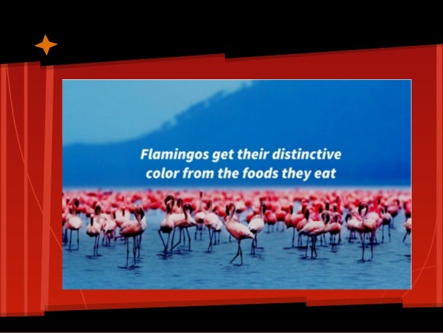 Did you know.... Slide 3