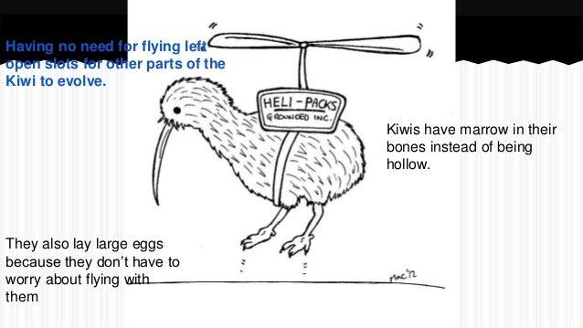 Kiwi Bird Fruit Diagram
