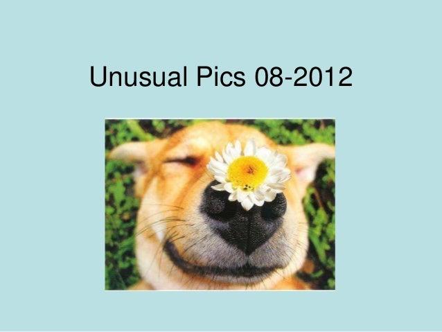 Unusual Pics 08-2012