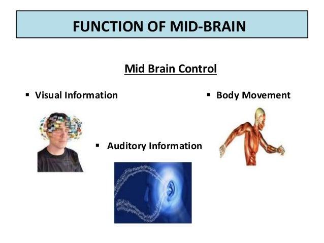 Medicine to improve memory loss image 3