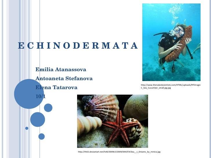 E C H I N O D E R M A T A Emilia Atanassova Antoaneta Stefanova Elena Tatarova 10/1 http://th02.deviantart.net/fs40/300W/i...