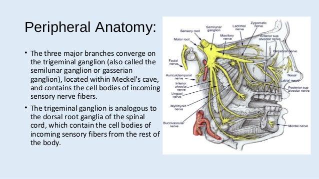 Updated trigeminal neu...