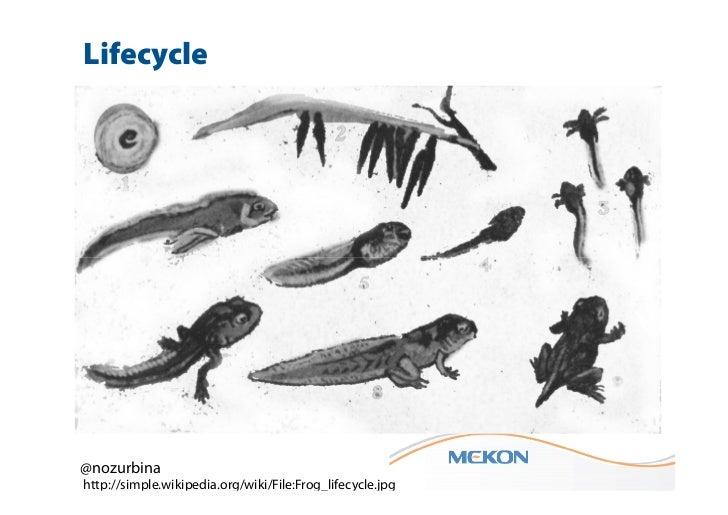 Lifecycle@nozurbinahttp://simple.wikipedia.org/wiki/File:Frog_lifecycle.jpg