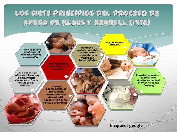 Los siete principios del proceso de apego de Klaus y Kennell (1976)<br />*Imágenes google<br />