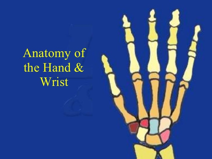 Upper extremity anatomy & positioning