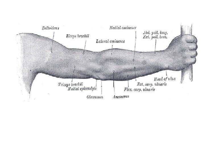 Upper Limb Slide 3