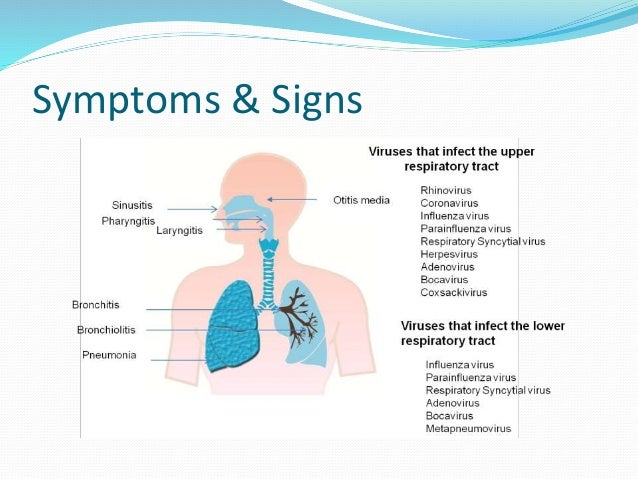 upper respiratory tract infection & otitis media, Human Body