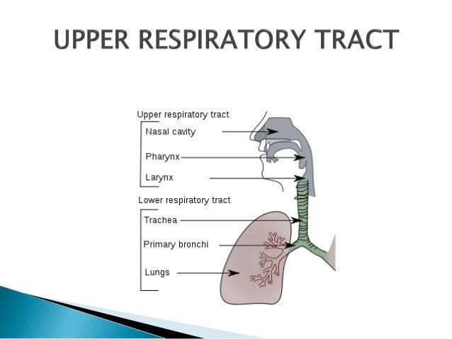 Upper respiratory infections Slide 3