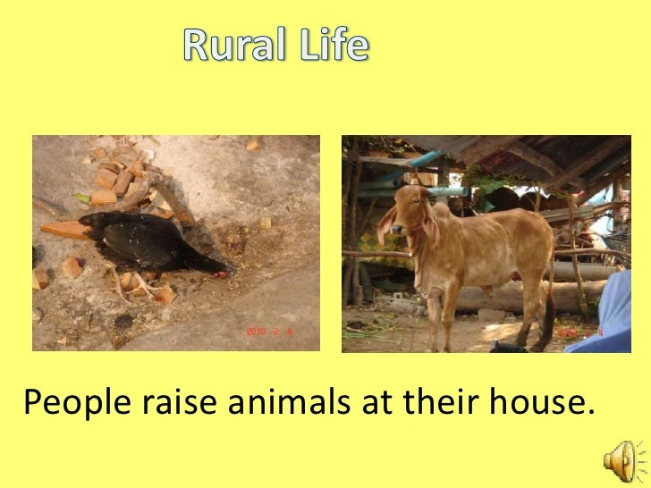 urban life and rural life Rural vs urban life in the 1920's design by dóri sirály for prezi was considered safe, with close personal ties and morals and hard work in the 1920's half of the.