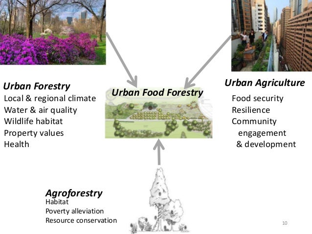 Urban food forestry thesis