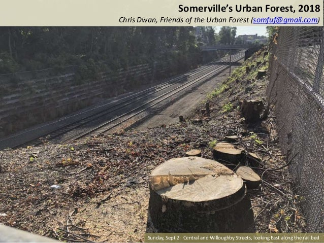 Somerville's Urban Forest, 2018 Chris Dwan, Friends of the Urban Forest (somfuf@gmail.com) Sunday, Sept 2: Central and Wil...