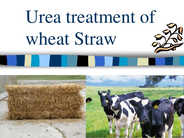 Urea treatment ofwheat Straw