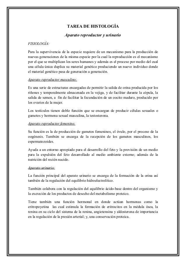 Histología de Aparatos Urinario y reproductores Slide 2