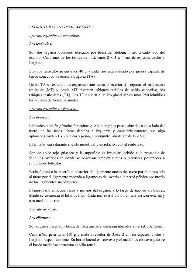 Histología de Aparatos Urinario y reproductores Slide 3