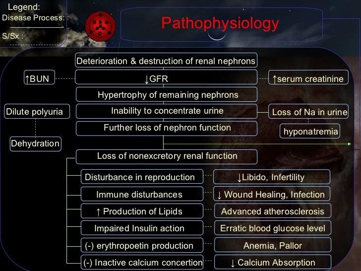 Pathophysiology Dilute polyuria Legend: Disease Process: S/Sx : Deterioration & destruction of renal nephrons ↓ GFR ↑ BUN ...
