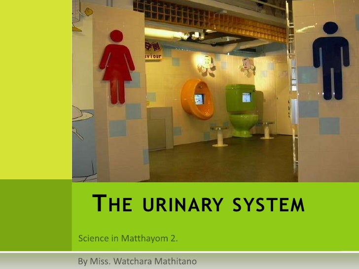 Science in Matthayom 2.<br />The urinary system<br />By Miss. WatcharaMathitano<br />