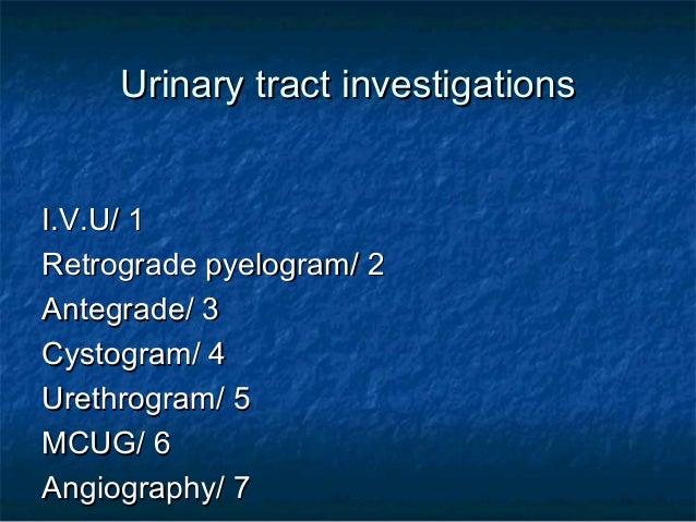 Urinary system 1 Slide 2