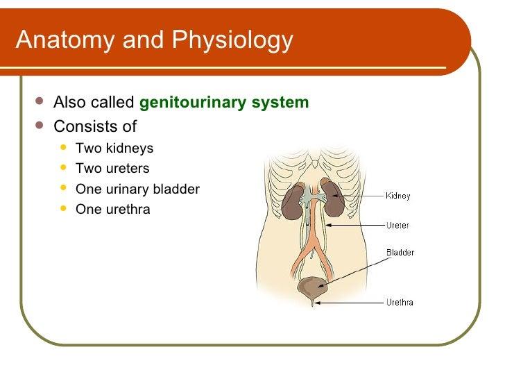 Urinary System Terminology