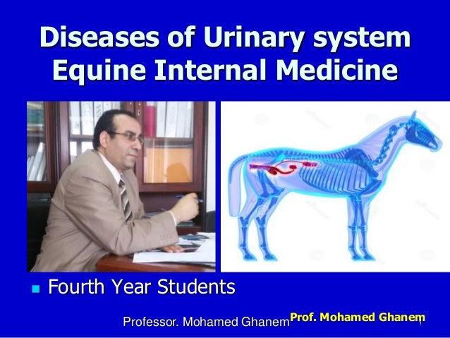 Prof. Mohamed Ghanem Diseases of Urinary system Equine Internal Medicine  Fourth Year Students Professor. Mohamed Ghanem 1