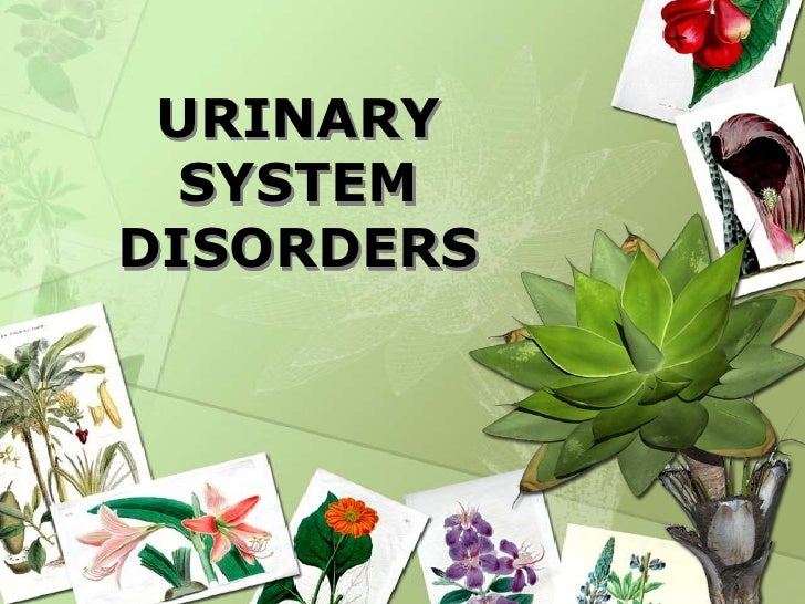 URINARY SYSTEM DISORDERS<br />