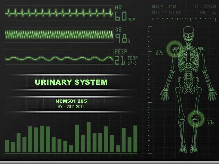 URINARY SYSTEM<br />NCM501 205 <br />SY – 2011-2012<br />