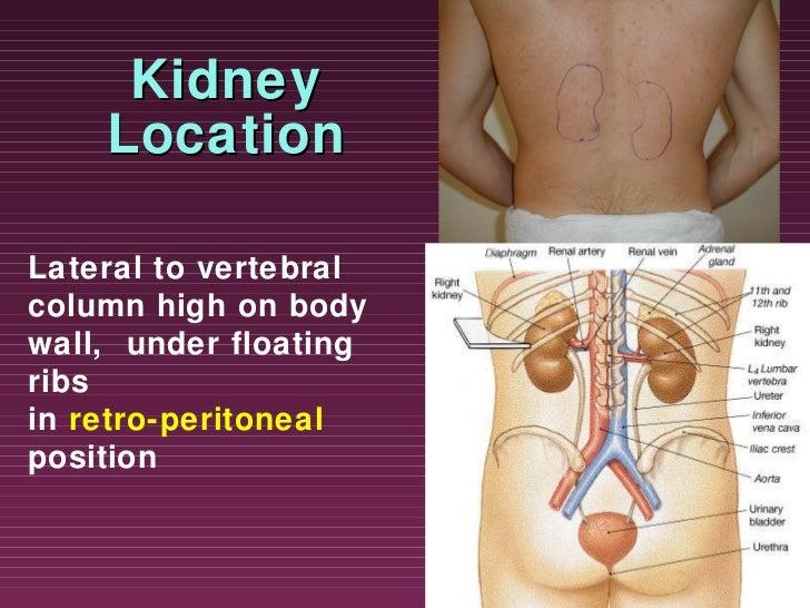 Urinary system ppt slide