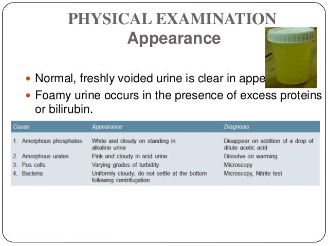 PHYSICAL EXAMINATION Appearance  Normal, freshly voided urine is clear in appearance.  Foamy urine occurs in the presenc...