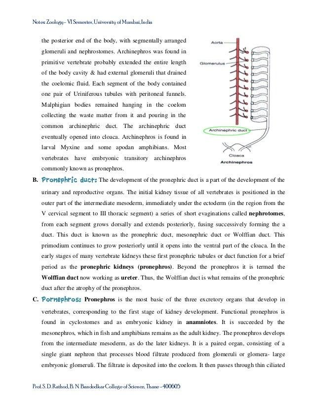 Urogenital system in vertebrates: TYBSc course Semester-VI – USZ0601o…